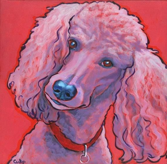 The Very Smart Poodle Dogs Health Poodleslove Poodlechile