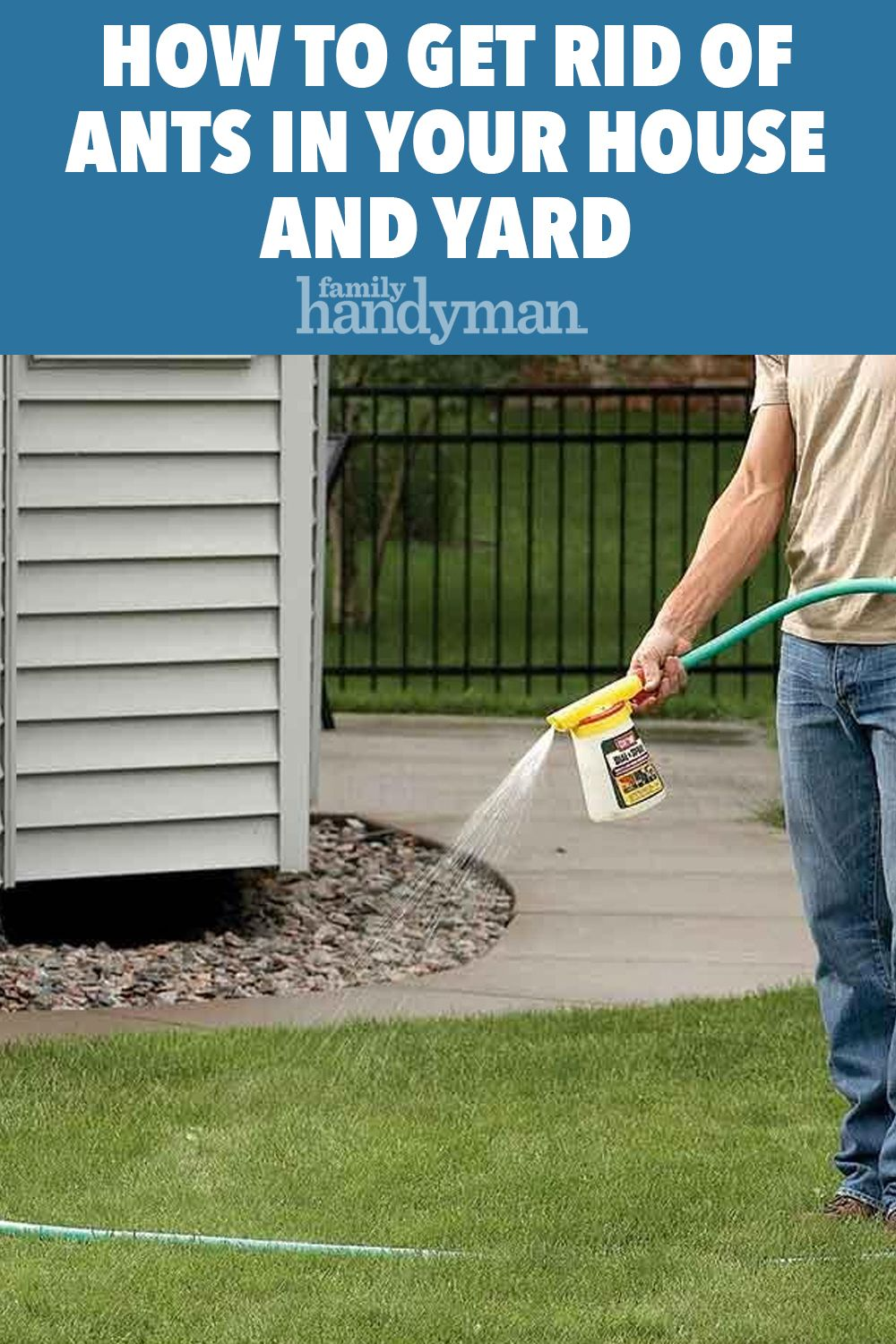 How to get rid of ants in your house and yard in 2020
