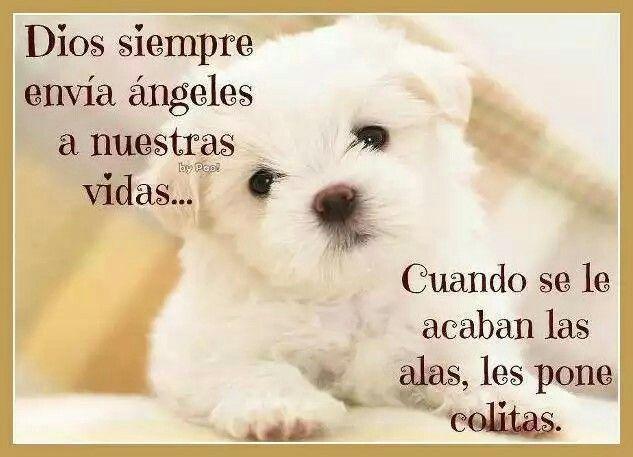 Los Perritos Son Angeles Perros Frases Perros Y Mamá