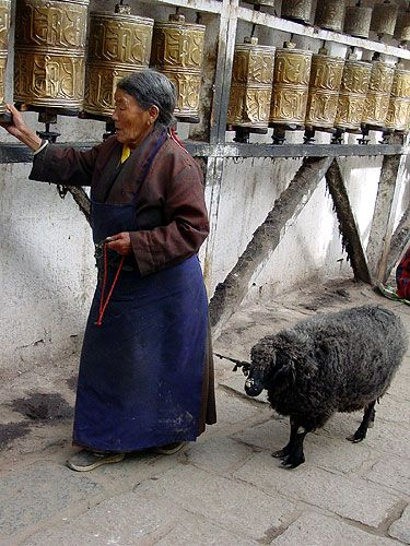Woman with Pet Sheep