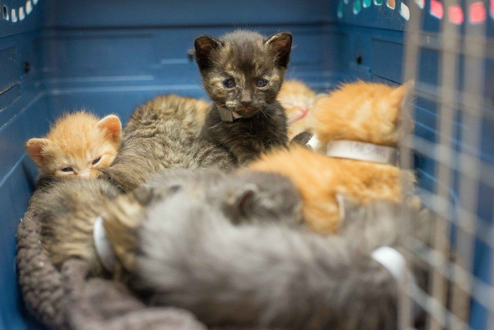 Surrogate Cat Mom Takes In 14 Hungry Kittens And Saves Their Lives Cat Mom Kittens Raining Cats And Dogs