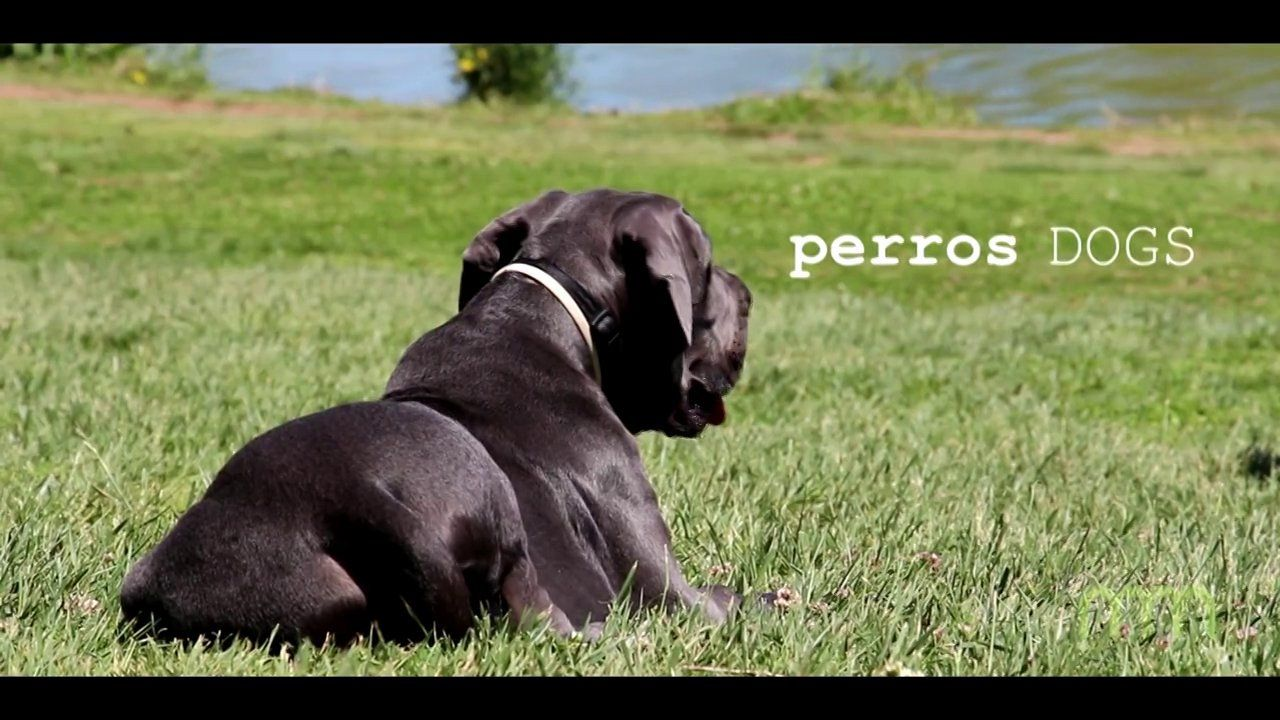 perros DOGS on Vimeo