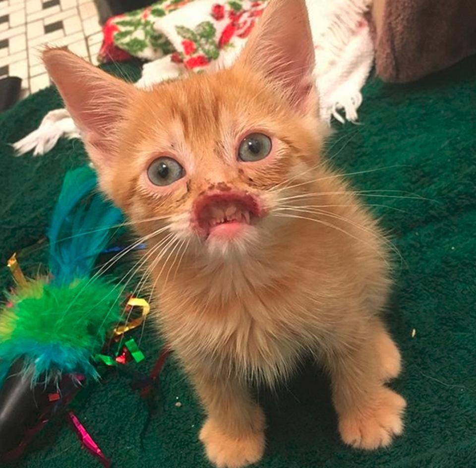 Pin on Great Kitties