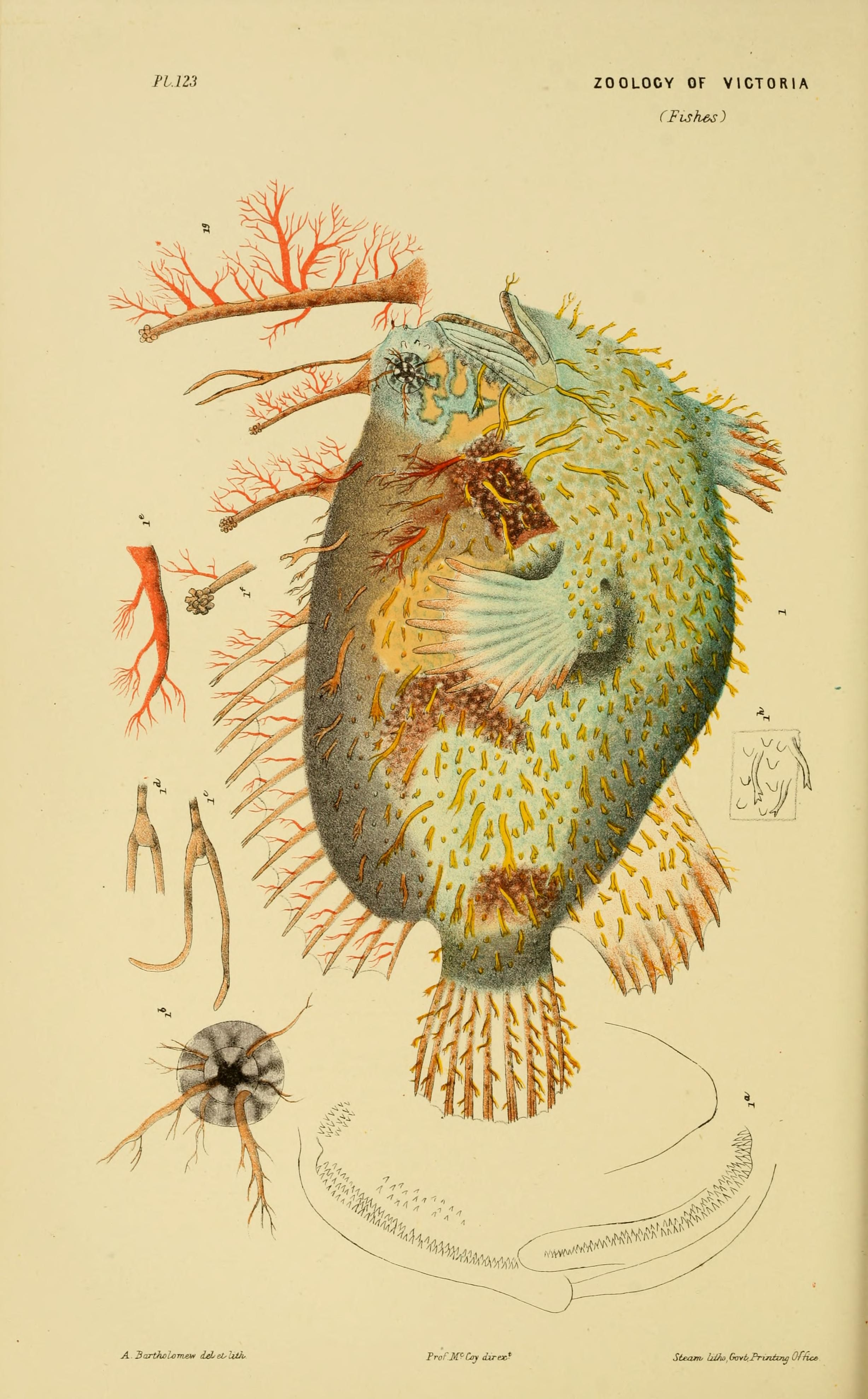 Decade 11-15 - Natural history of Victoria. - Biodiversity Heritage ...