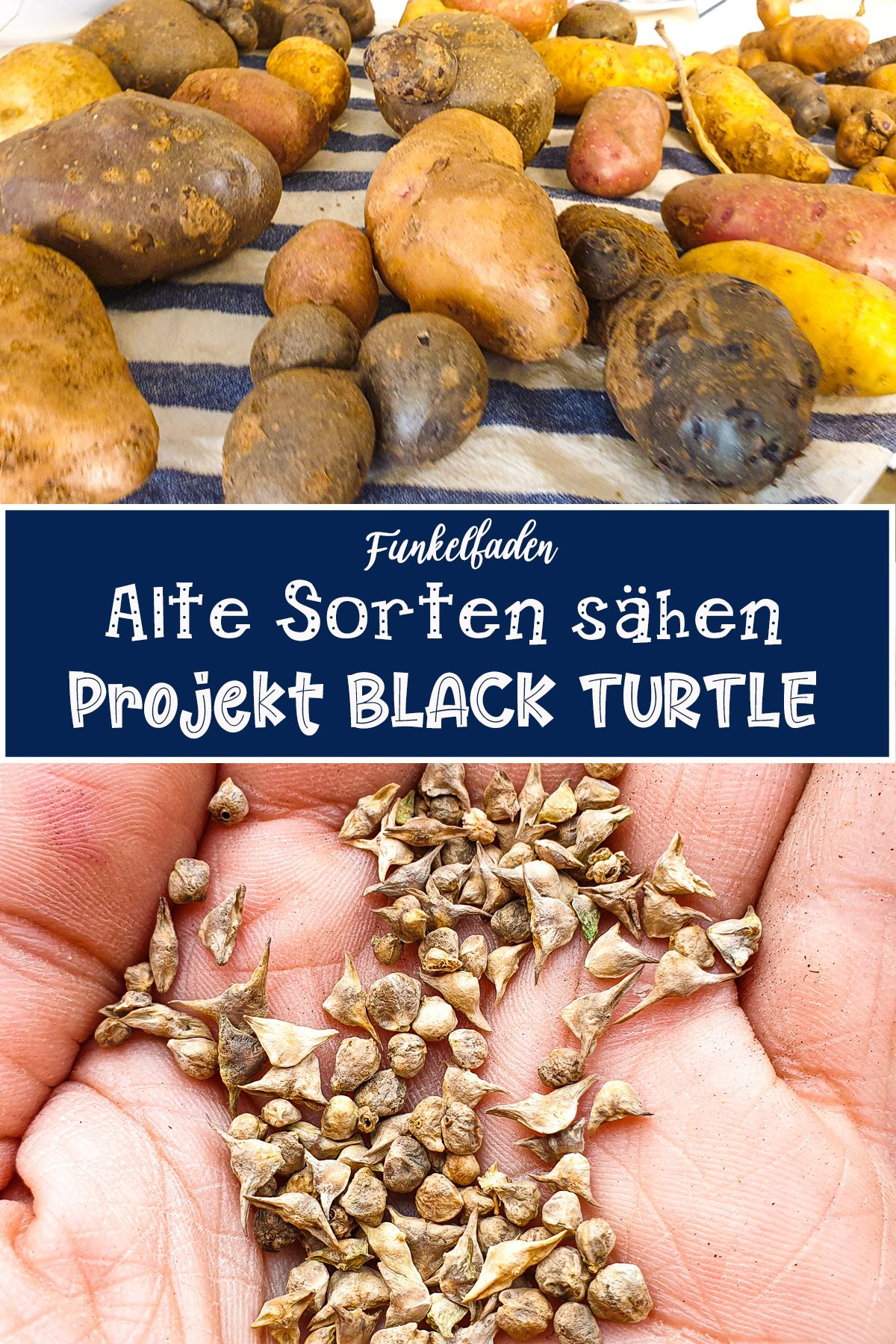 Projekt Black Turtle Altes Saatgut Im Garten Nachhaltig Pflanzen Pflanzen Bohnen Pflanzen Gartenarten