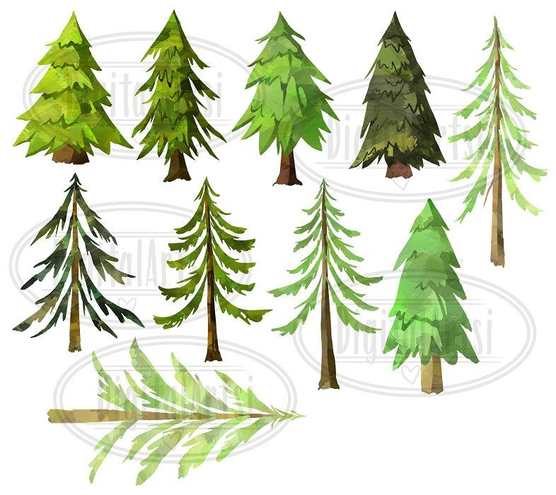 Watercolor Pine Trees Clipart By Digitalartsi On Creativemarket