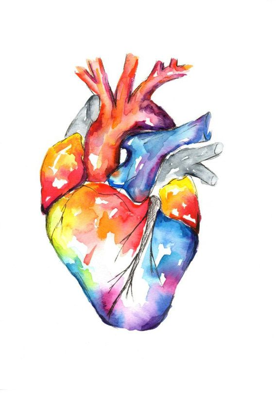 Watercolour Anatomy Art Heart | Wallpapers | Pinterest | Arte de ...