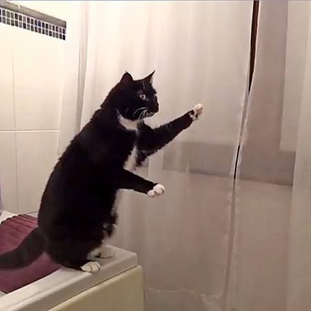 a cat poses in front of the mirror and then starts waving