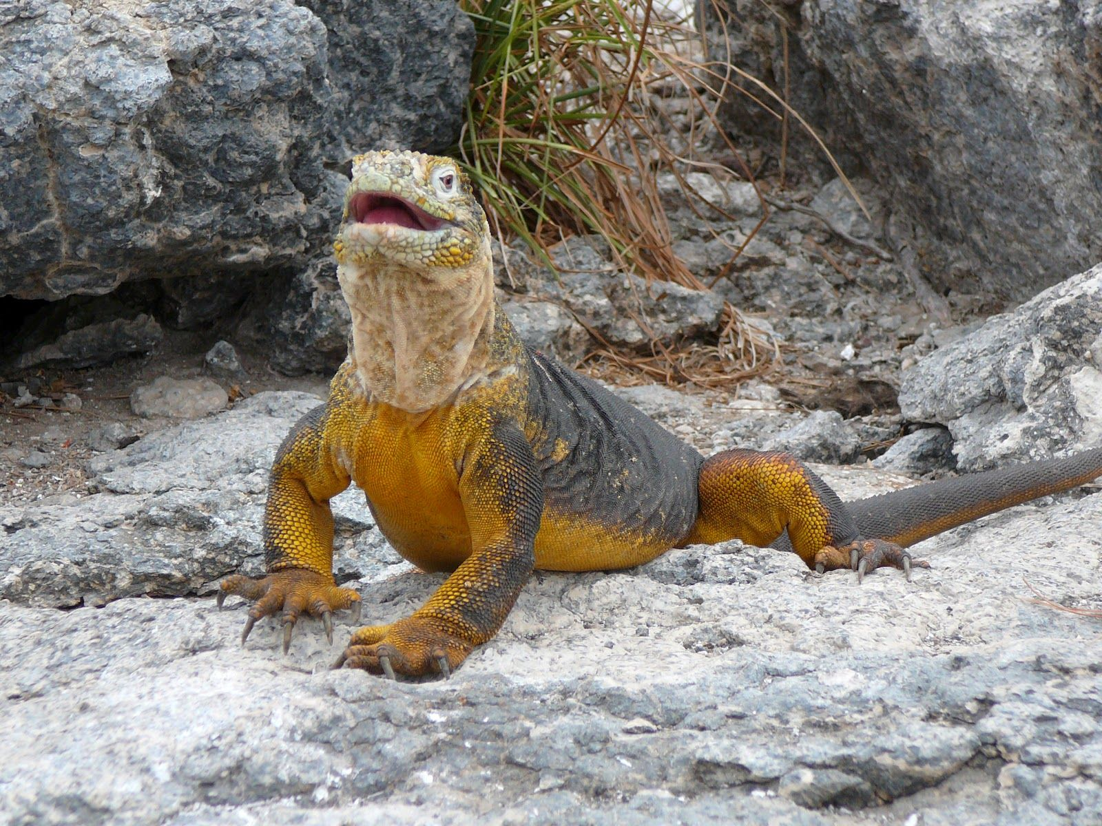 The Galapagos Islands Are A Protected Group Of Islands Off The Coast Of Equador And Have Been
