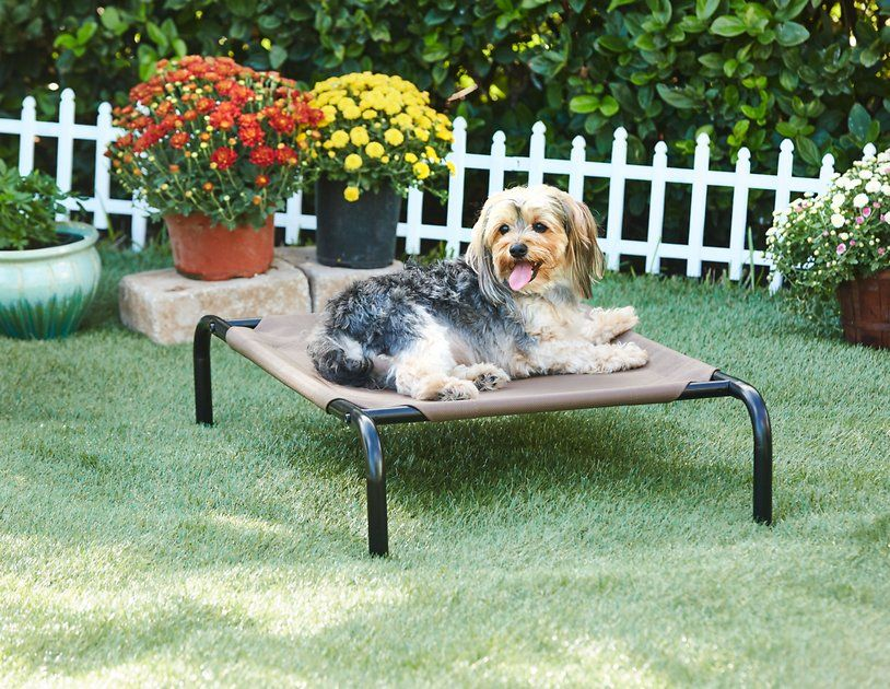 Frisco SteelFramed Elevated Dog Bed, Terracotta, Large
