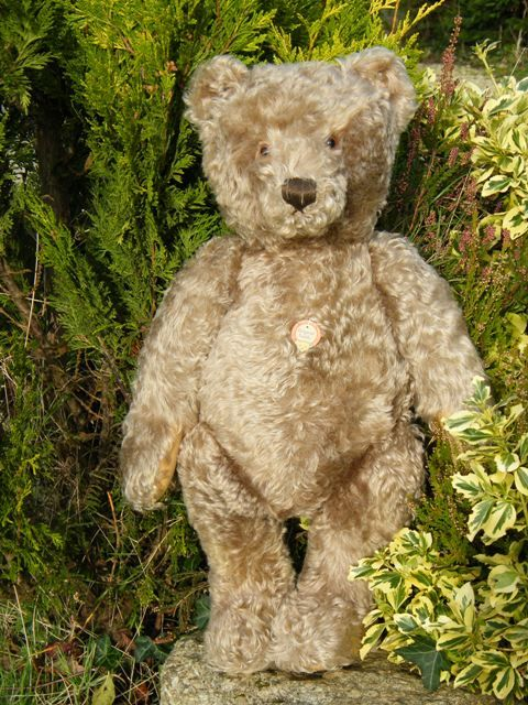 Bears old 1950s teddy Vintage Teddy