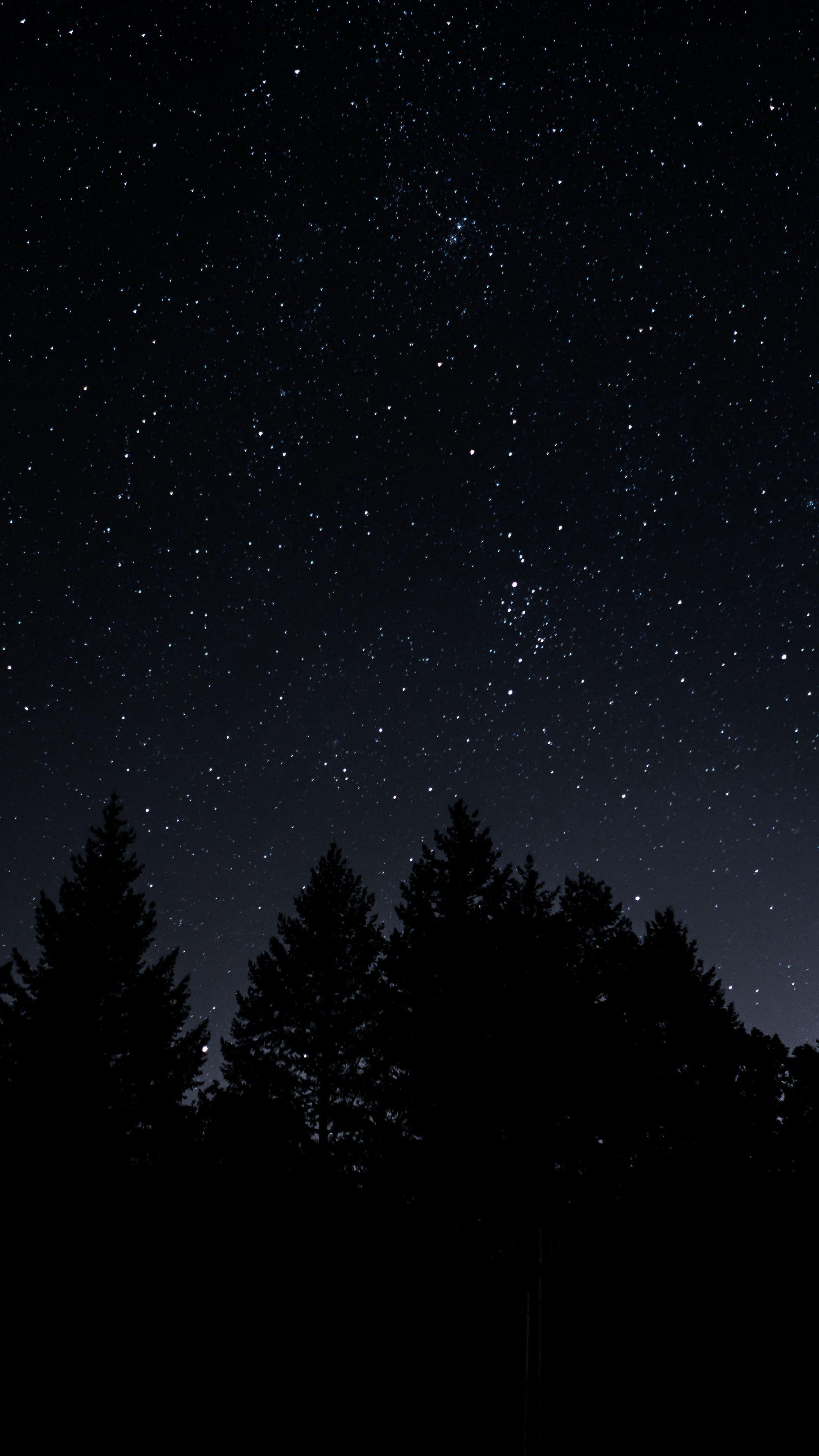 Sky starrysky trees night wallpapers hd 4k background