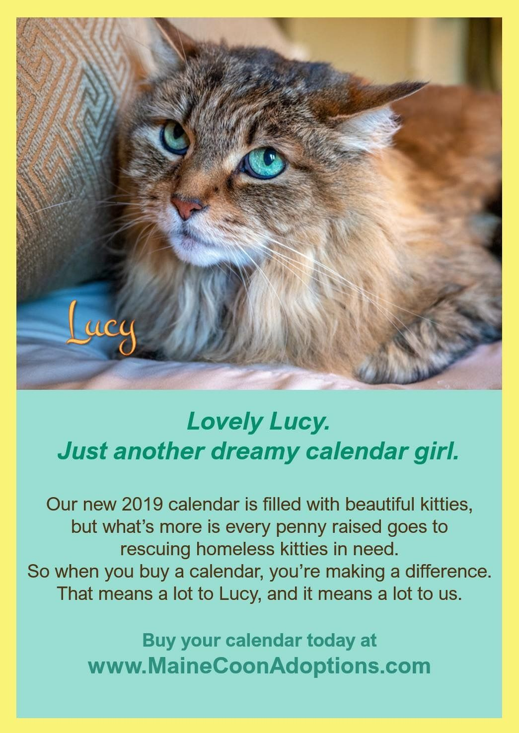 Our New Kitty Calendar Is Only 20 And That Includes The Cost Of Shipping Within The Usa Purchase Your Calendar Soon As We Sell Out Cat Rescue Cats Cat Memes
