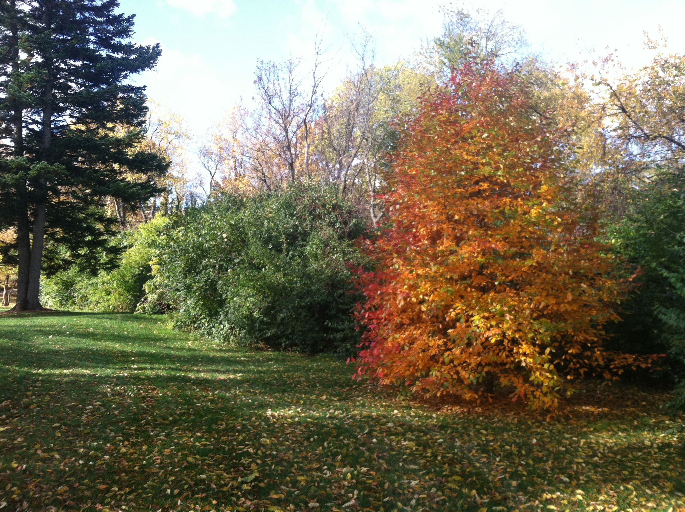 32 best Fall Gardens at Klehm - Rockford, IL images on Pinterest ...