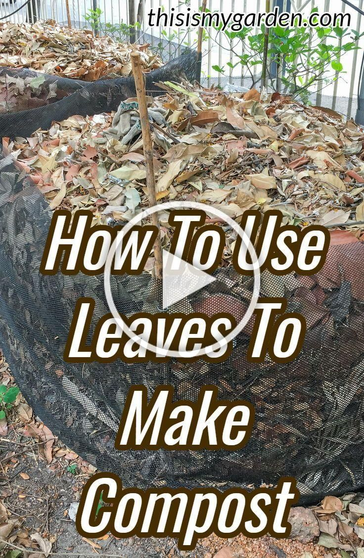 How to use leaves to make great compost  the tips and tricks for composting leaves