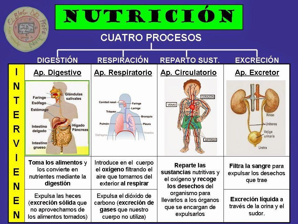 La Nutricion Humana Buscar Con Google Funciones De Nutricion Cuerpo Humano Para Niños Aparatos Del Cuerpo Humano