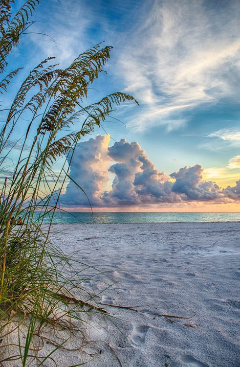 Sarasota sunset through the sea oats
