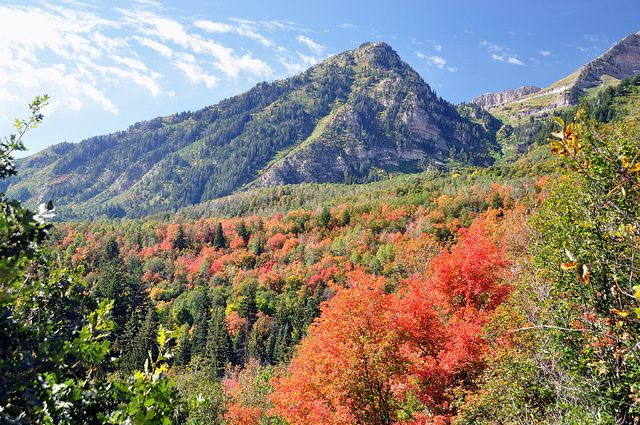 Autumn in Utah by Natasha's Pix, via Flickr