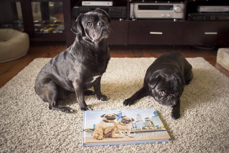 Review Pugs Of Perth Coffee Table Book Pugs Dog Tshirt Pug Lover