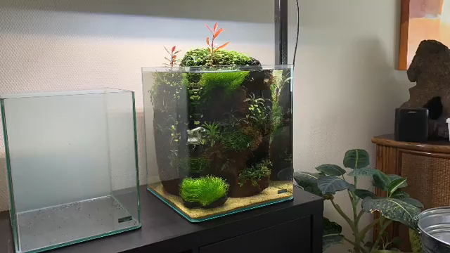 Water Change And Trimming Time The Lava Stone Nano Betta Tank Video Betta Tank Aquarium Aquarium Fish Tank