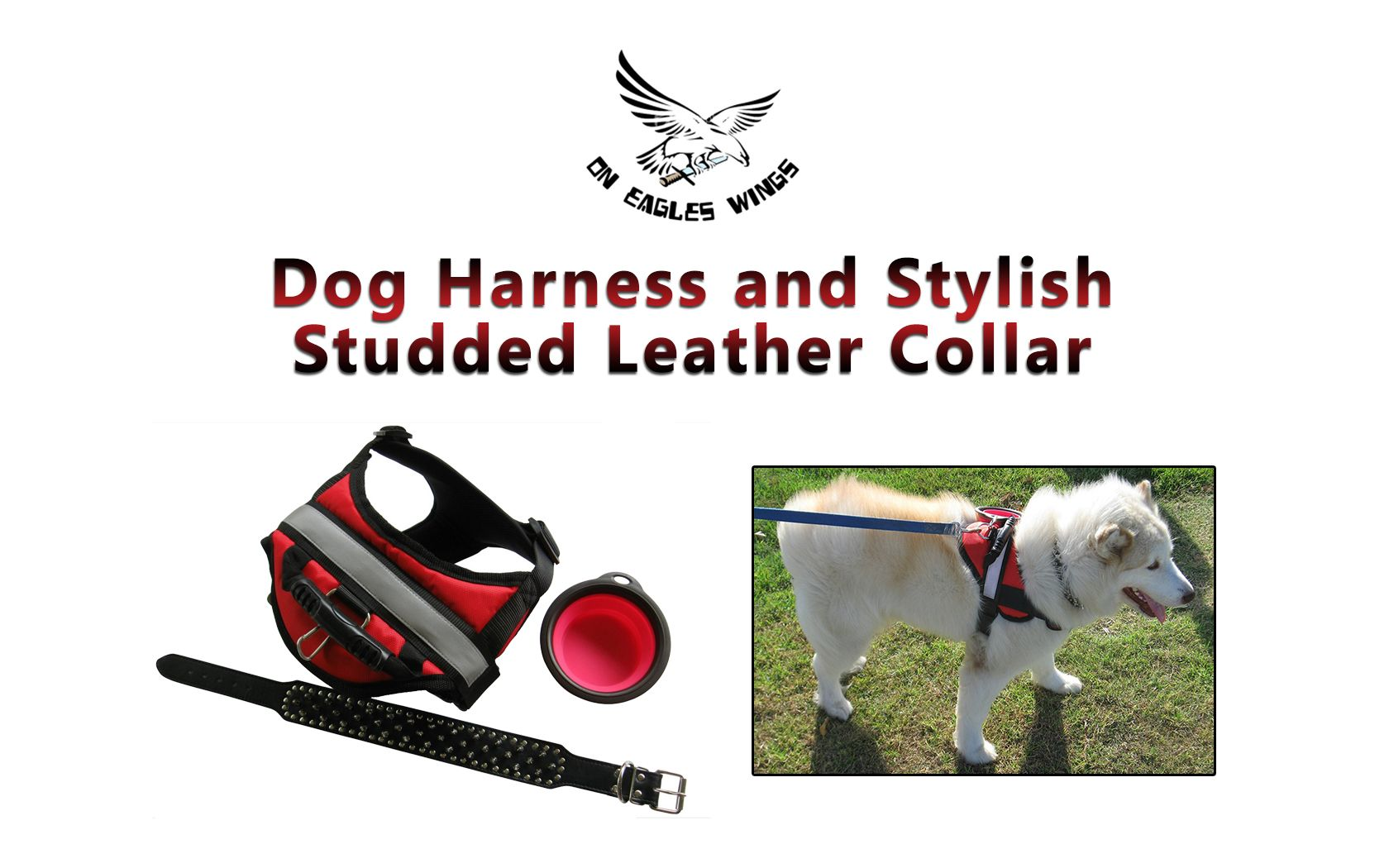 Dog Leash The Size that Matters, Find It Out! http