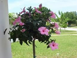 Artificial Pink Hibiscus Topiary Faux Flowering Collection