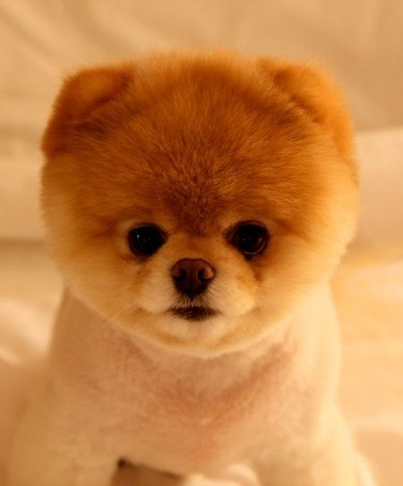 12 Pictures Of Baby Animals So Cute They Don T Look Real Baby Animals Pictures Cute Dogs Breeds Cute Baby Animals