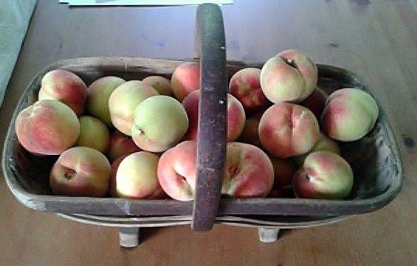 English peaches...yum!