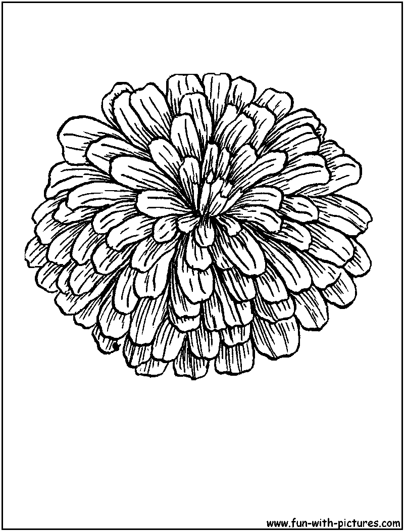 Coloring pages zinnia - Coloring Sheet Of Zinnias Zinnia Coloring Page