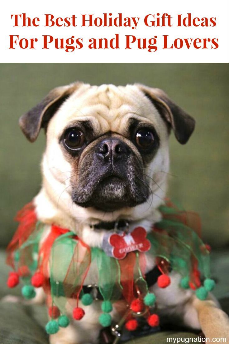 Santa Pug Brings you The Best Holiday Gift Ideas For Pugs and Pug Lovers