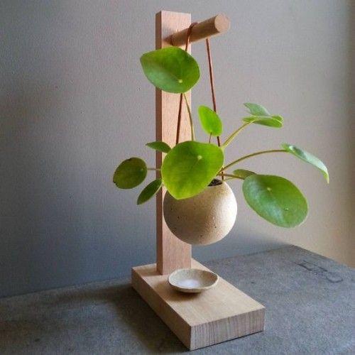Die neue Trendpflanze: Pilea peperomioides #jardineríaenmacetas