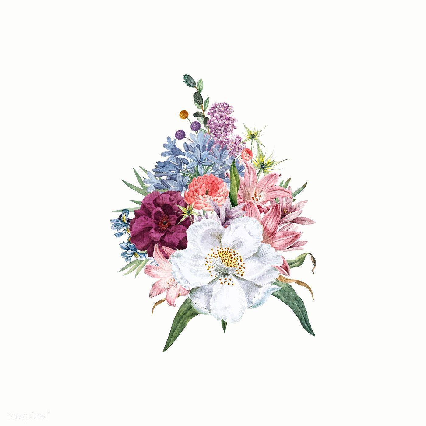 Vintage blooming jasmine flower vector free image by