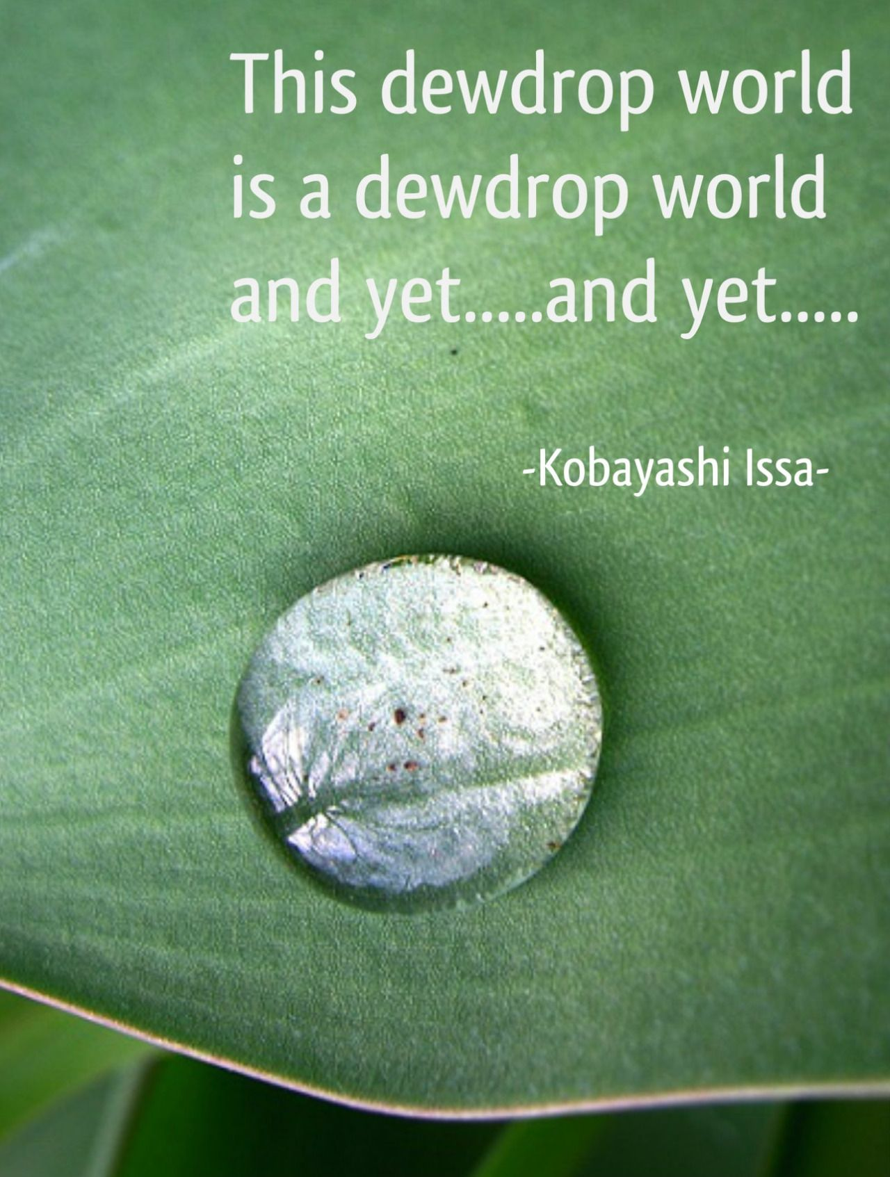 Draw & Wings. - This dewdrop world is a dewdrop world. And...