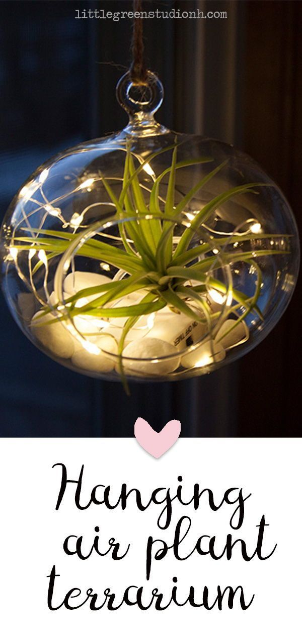 Hanging Air Plant Terrarium with fairy lights