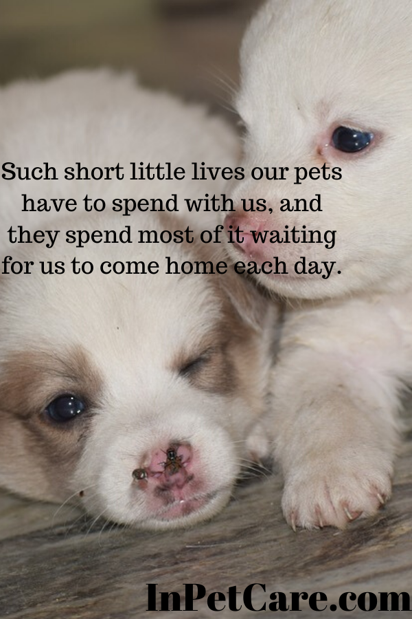 Such Short Little Lives Our Pets Have To Spend With Us And They Spend Most Of It Waiting For Us To Come Cute Names For Dogs Dog Kisses Quote Puppy Dental