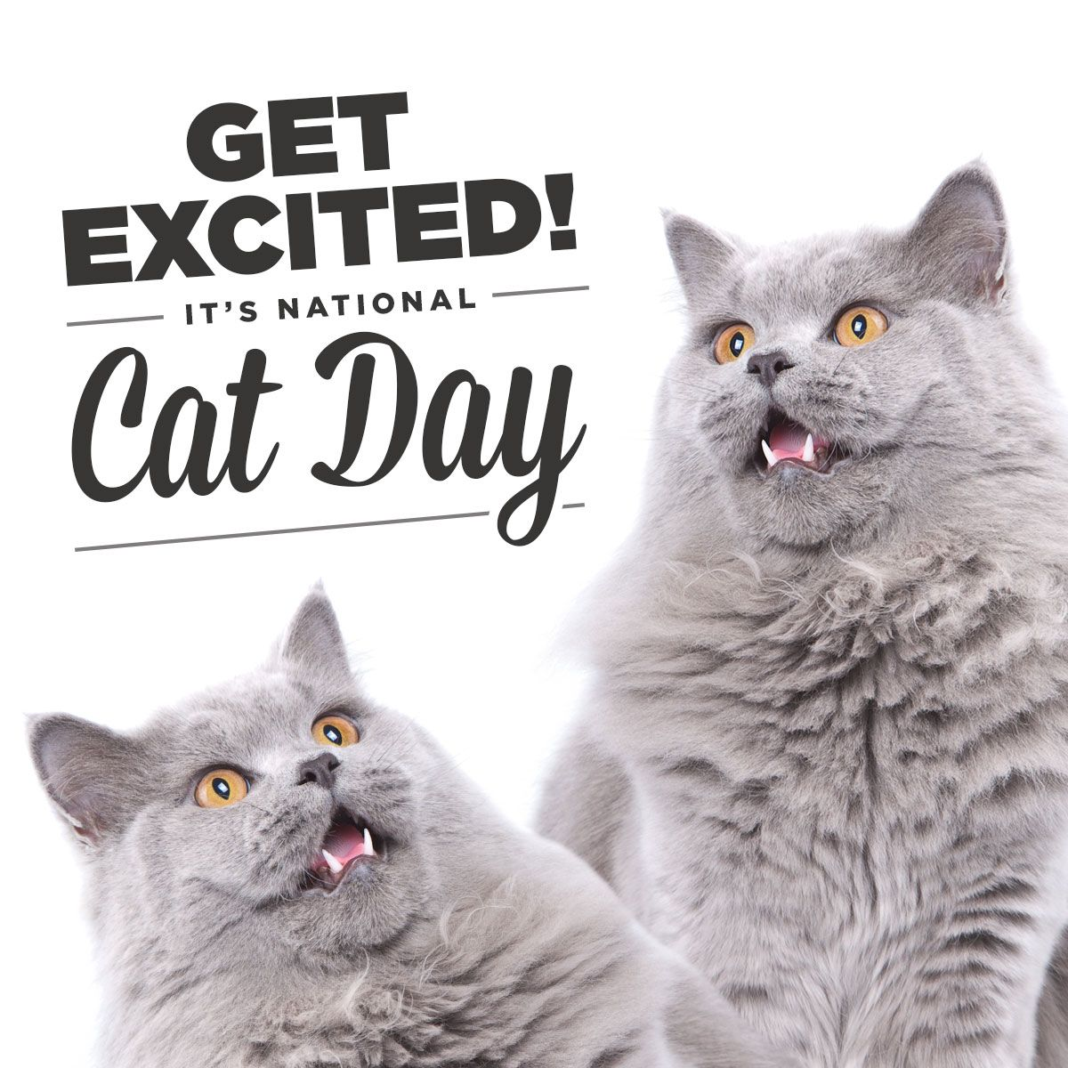 It's NationalCatDay! Much cat. Very meow. National cat