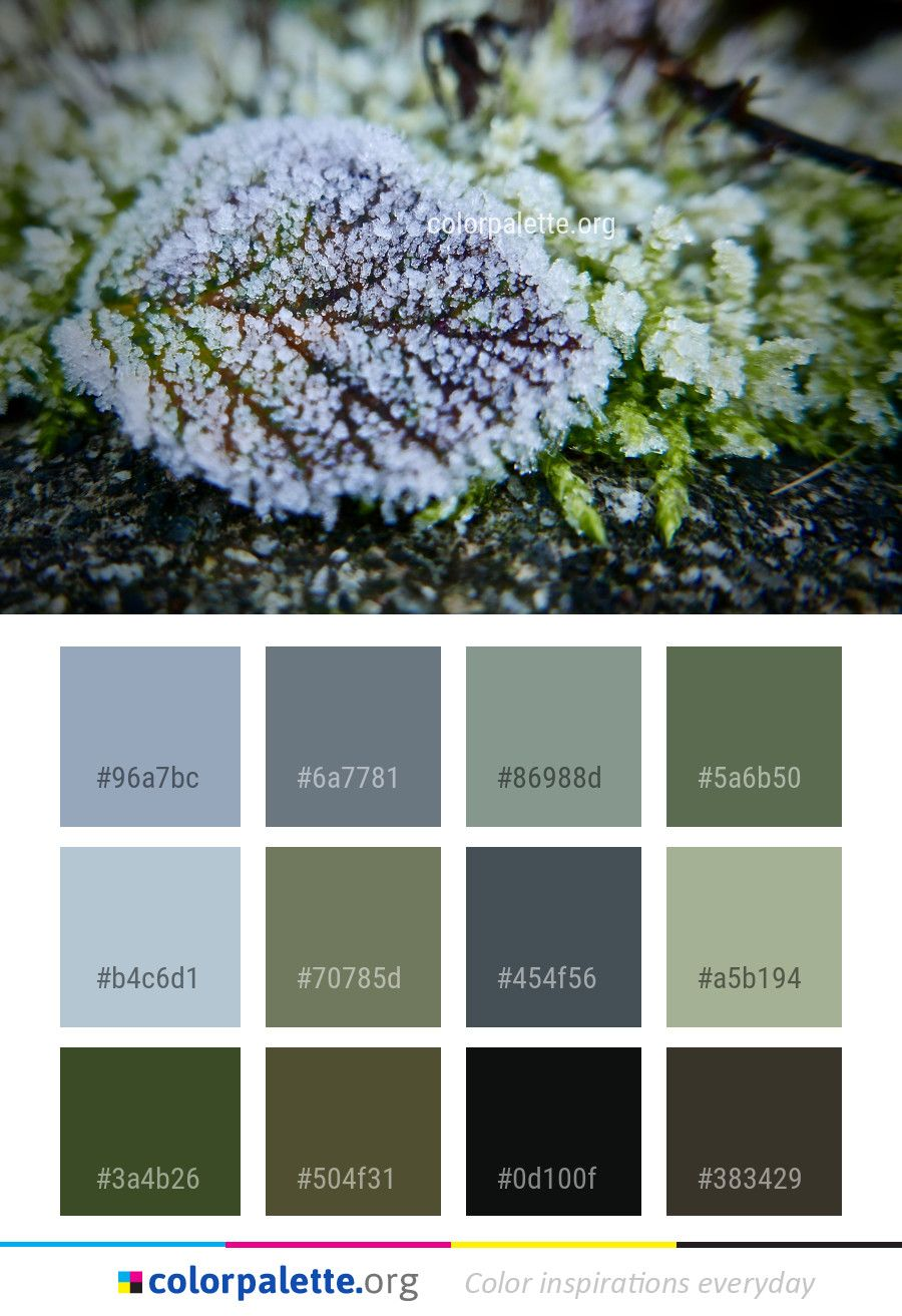 d6bd52093 Flora Vegetation Moss Color Palette #colors #inspiration #graphics .