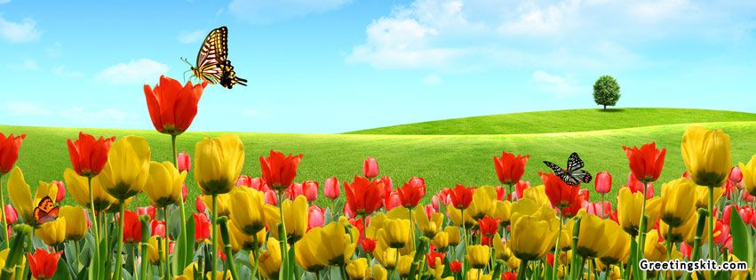 00 Beautiful Nature With Butterfly Fb Covers Cover Pics For Facebook Facebook Cover Facebook Timeline Covers