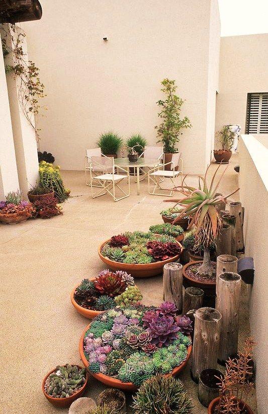 Terrazzi Piante Da Interno Piantare Fiori Giardino Di Cactus