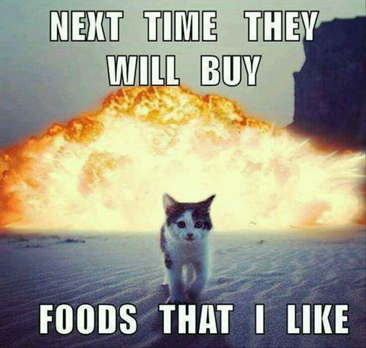 Next Time They Will Buy Foods That I Like Funny Animals Funny Animal Pictures Funny Cat Pictures