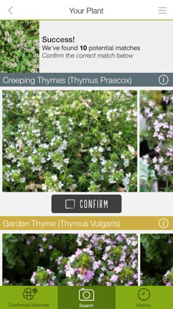 Review Like That Garden app helps you ID flowers (sort of