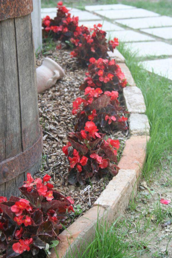 l'aiuola delle begonie