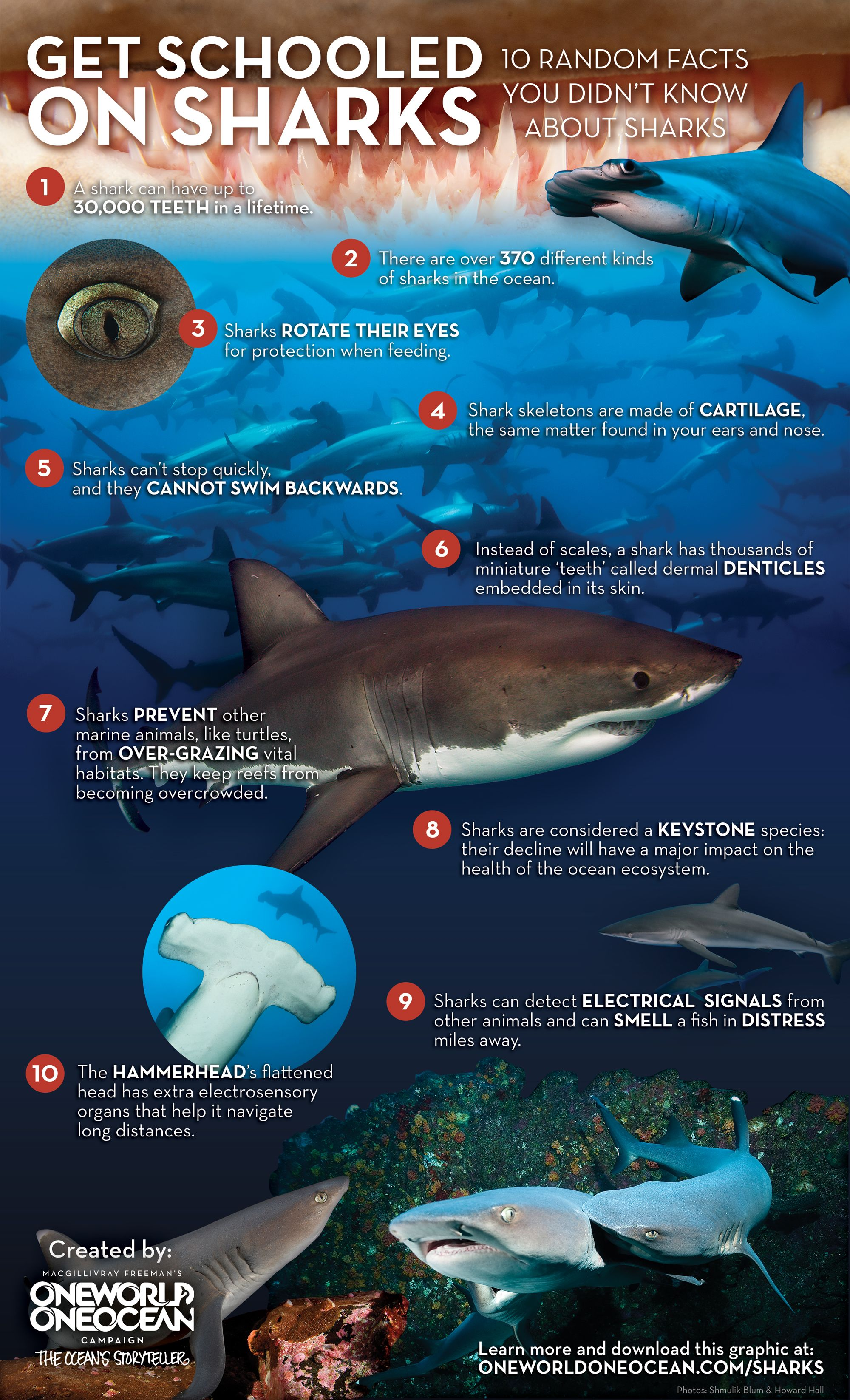 Get Schooled On Sharks Infographic