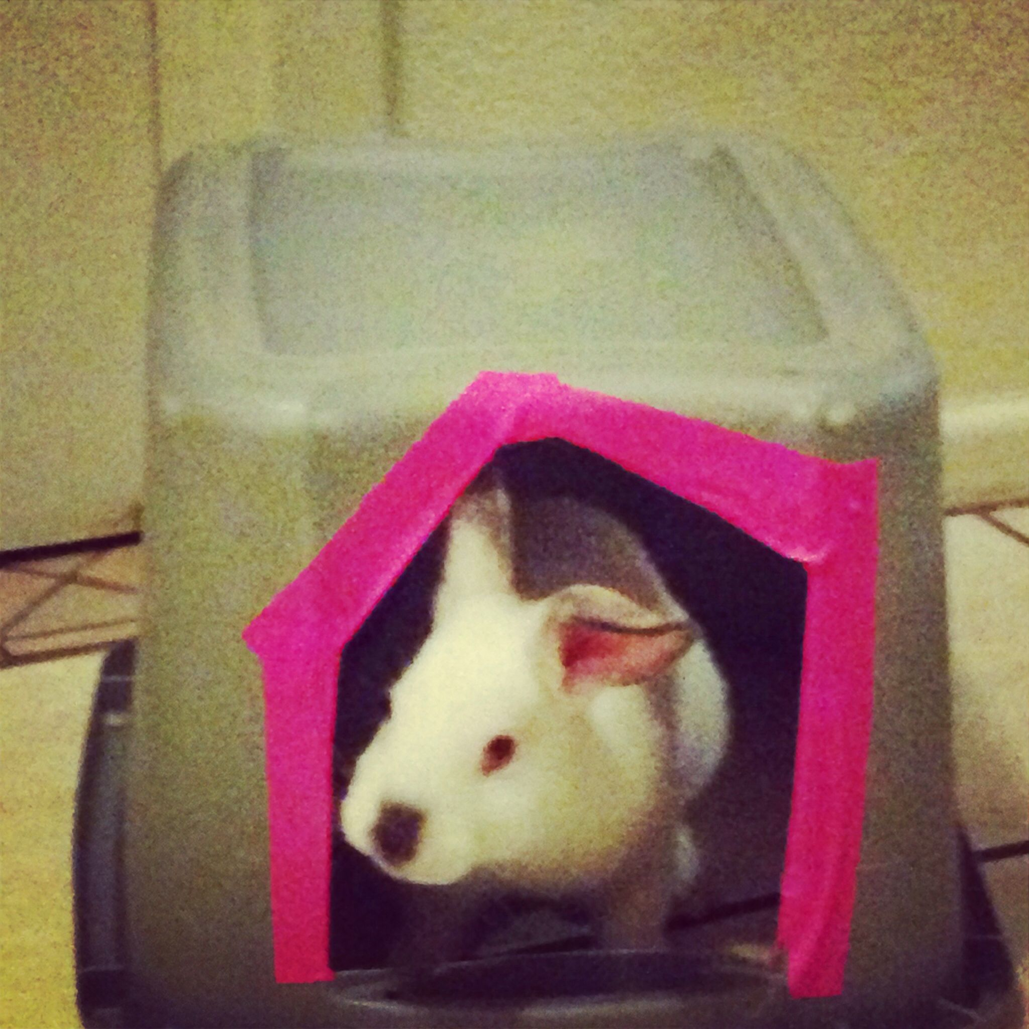 Hidey house for large bunny made from a Rubbermaid tub. It