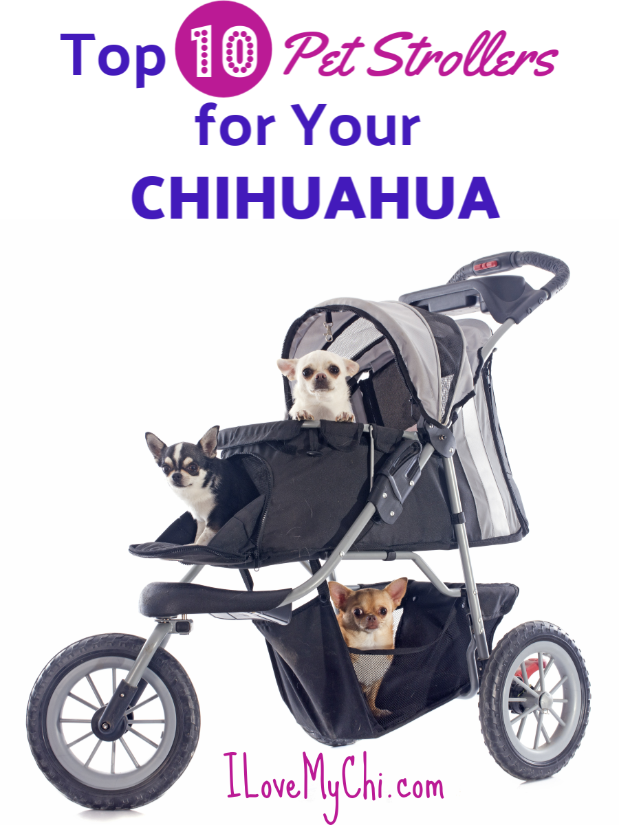 Top 10 Pet Strollers for Your Chihuahua Chihuahua, Big
