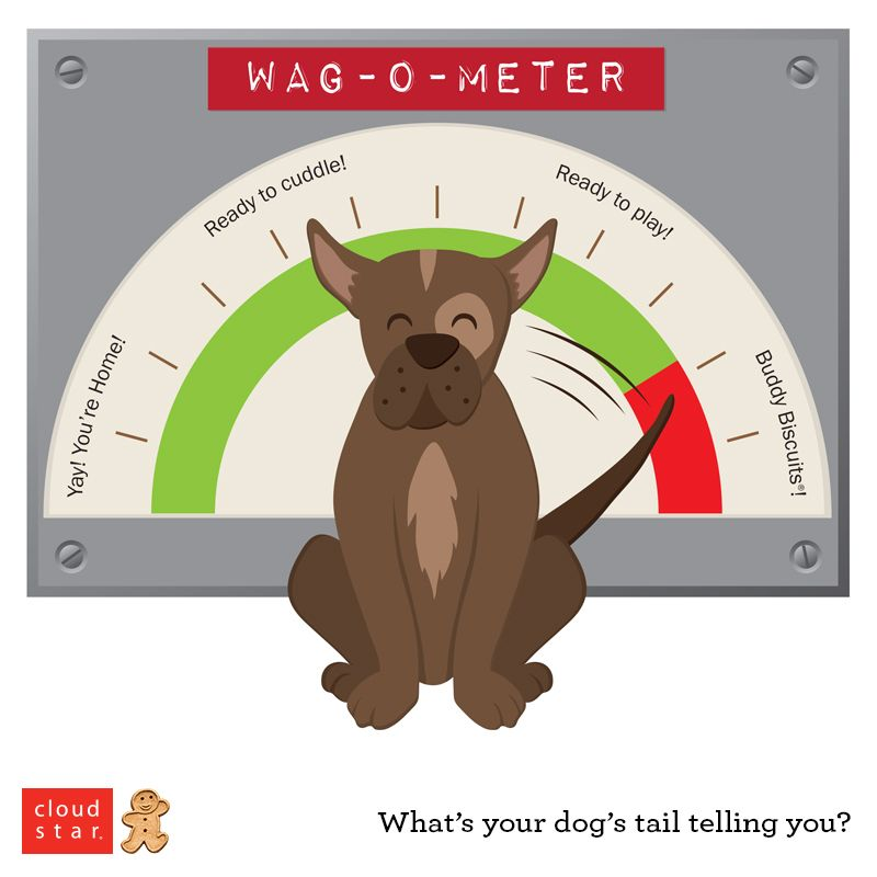 The Wag-O-Meter  What's your dog's tail telling you? | Fun