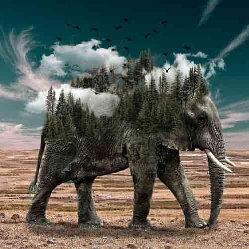 Arti Mimpi Gajah Gajah Dan Bayi Gajah