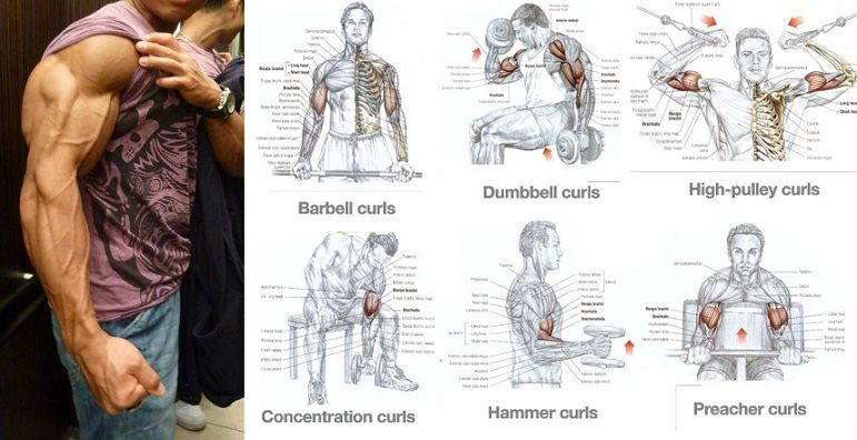 Quite simply put i think biceps are a joy to train for just about how to get big biceps four simple exercises to build big biceps altavistaventures Choice Image