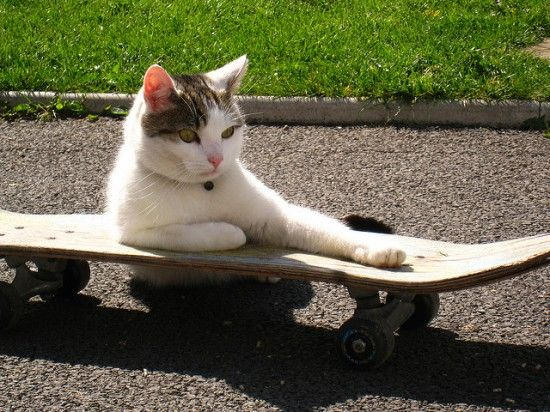 Awesome Skateboarding Cats Kittens Cat Skateboard Cats And Kittens