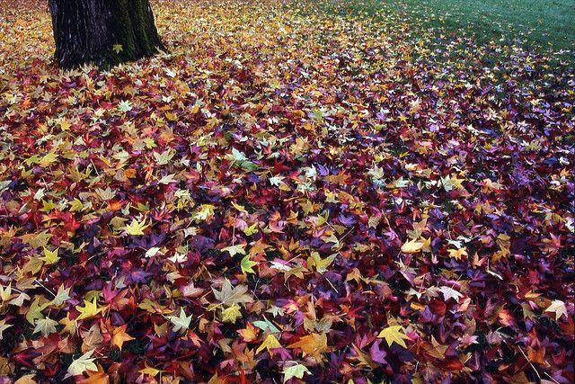 Cornwall Park Bellingham washington, Washington